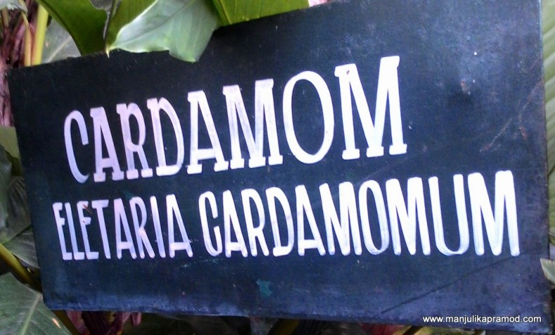 THE SPICY STORY OF CARDAMOMS