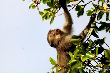 Wildlife in Sabah