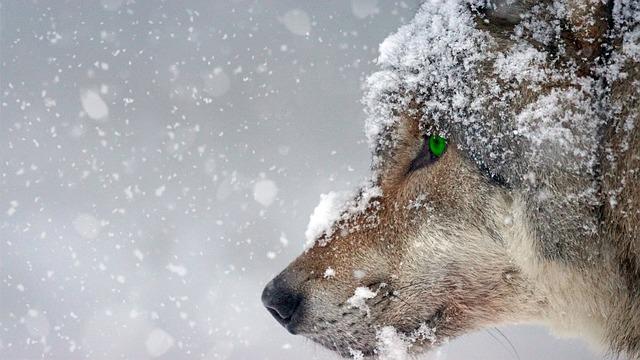 Wild: The Hunt