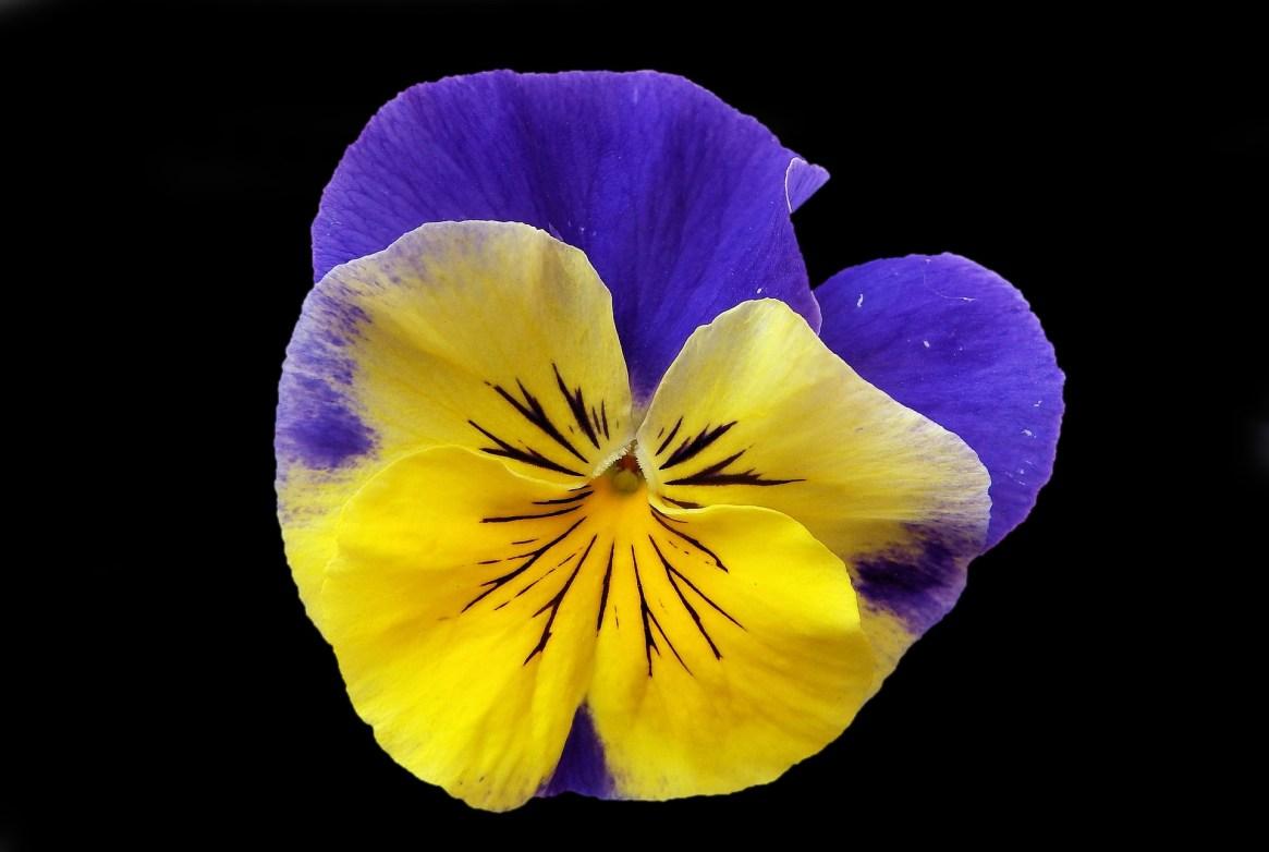flower-3180140_1920