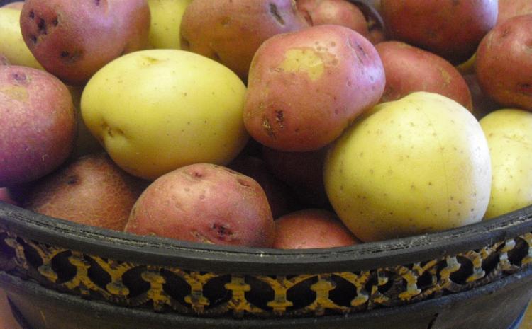 Potato half barrels