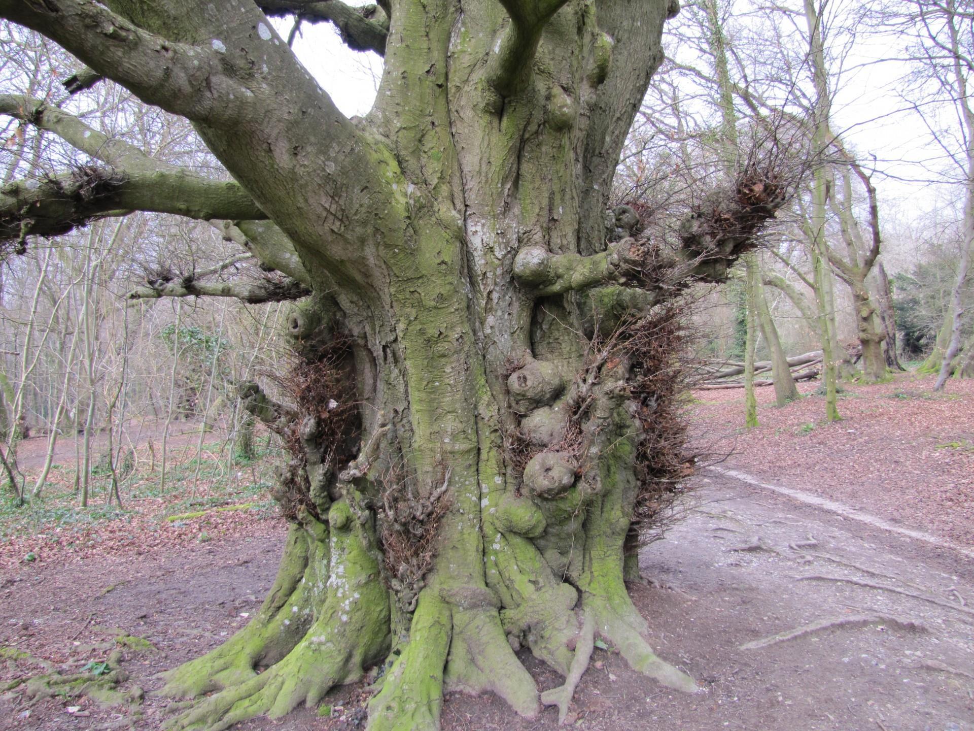 old-tree-1365007959afn
