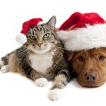 OUR PETS AND THE LAW