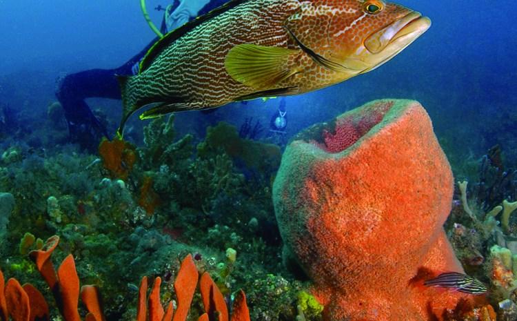 Marine Park on pollies' radar