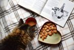 dry food for cats should not contain byproducts