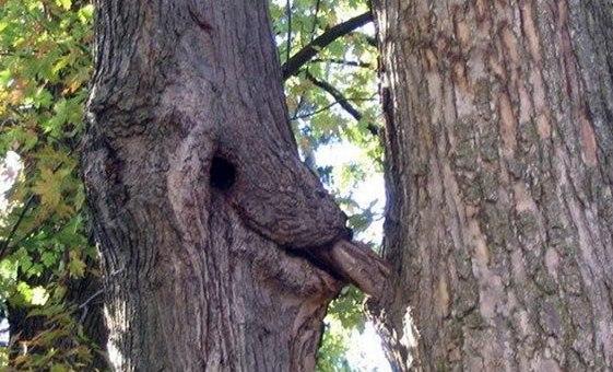 Week-end coquin à faire l'amour au sommet des arbres