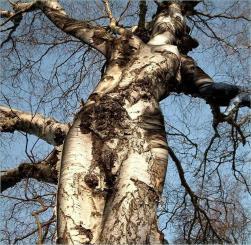 Un arbre à la forme suggestive