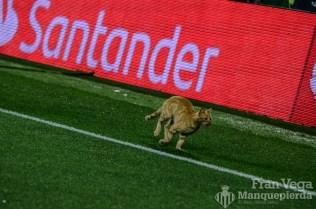 Expontaneo felino (Betis-Malaga 17-18)