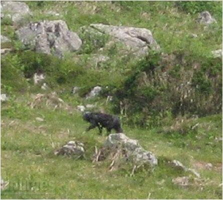 Beast of Dartmoor