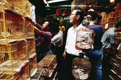Shopping for birds in Mong Kok