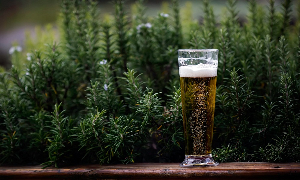 Ahead of Legalization Canada Brews Its First Cannabis Beer