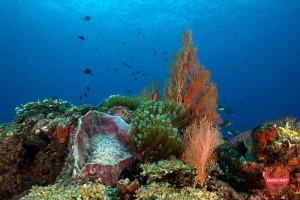 Radang Diving