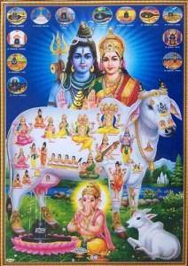 hindu sapi