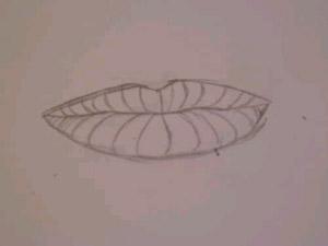profundidad del labio