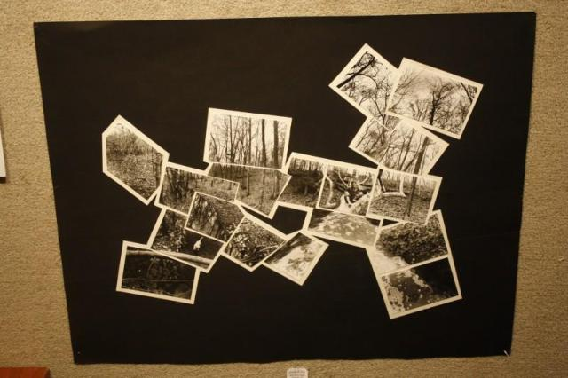 Katie Deangelis (12) combined photos to create one large photo of a wooded area.