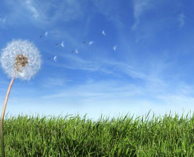 primavera e le allergie, le frequenze del benessere