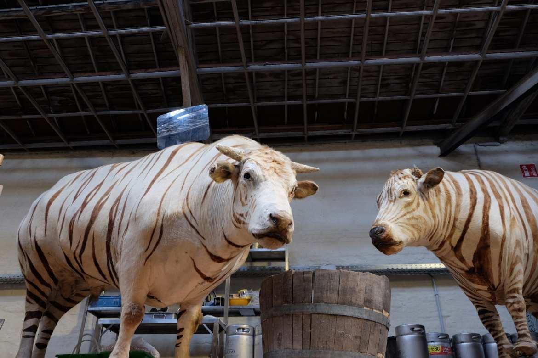 Inside Gruut Brewery, Ghent
