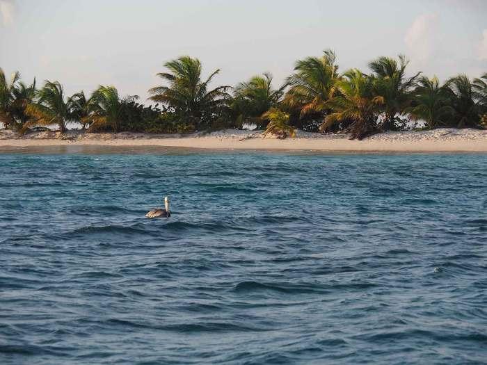 Pélican tranquillement dans l'eau au coucher du soleil sur Sandy Island.