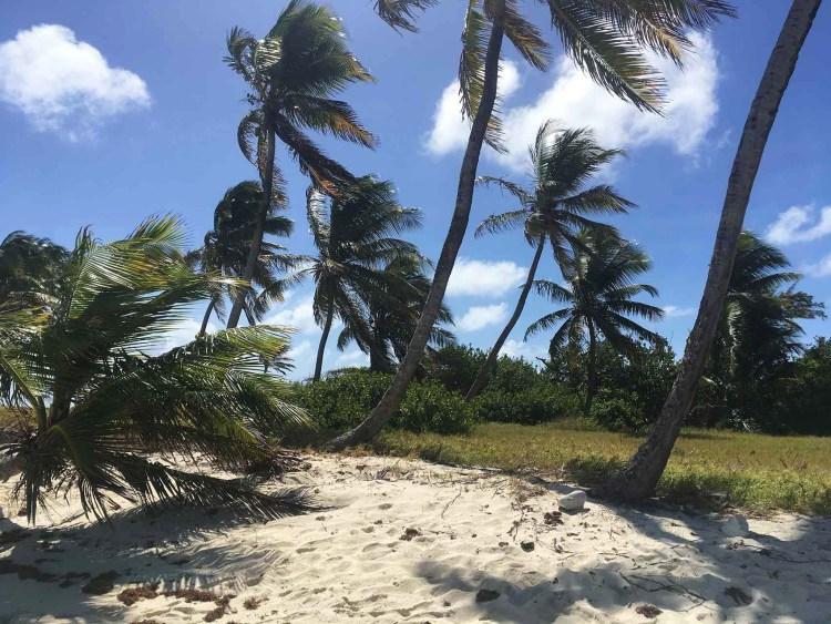 Les cocotiers de Petit Tabac, comme la scène du film Pirates des Caraïbes !