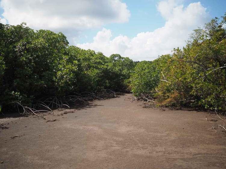 Terre sèche et humide à la fois pour cette environnement à la fois sur terre et dans l'eau : la mangrove.