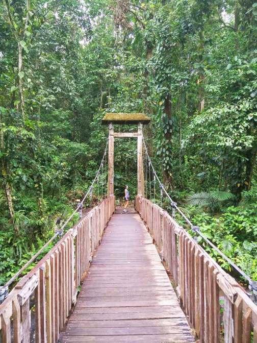 Pont suspendu près de la Maison de la Forêt en Guadeloupe.