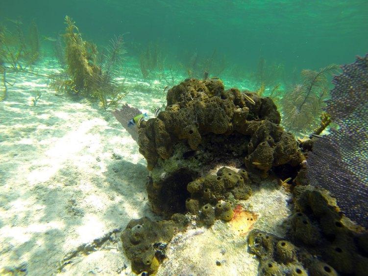 Coraux aux Berry Islands, aux Bahamas.