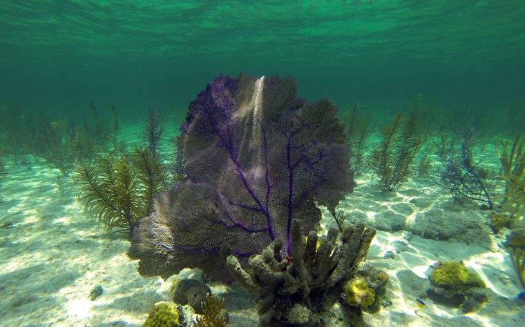Gorgones et poissons aux Berry Islands, aux Bahamas.