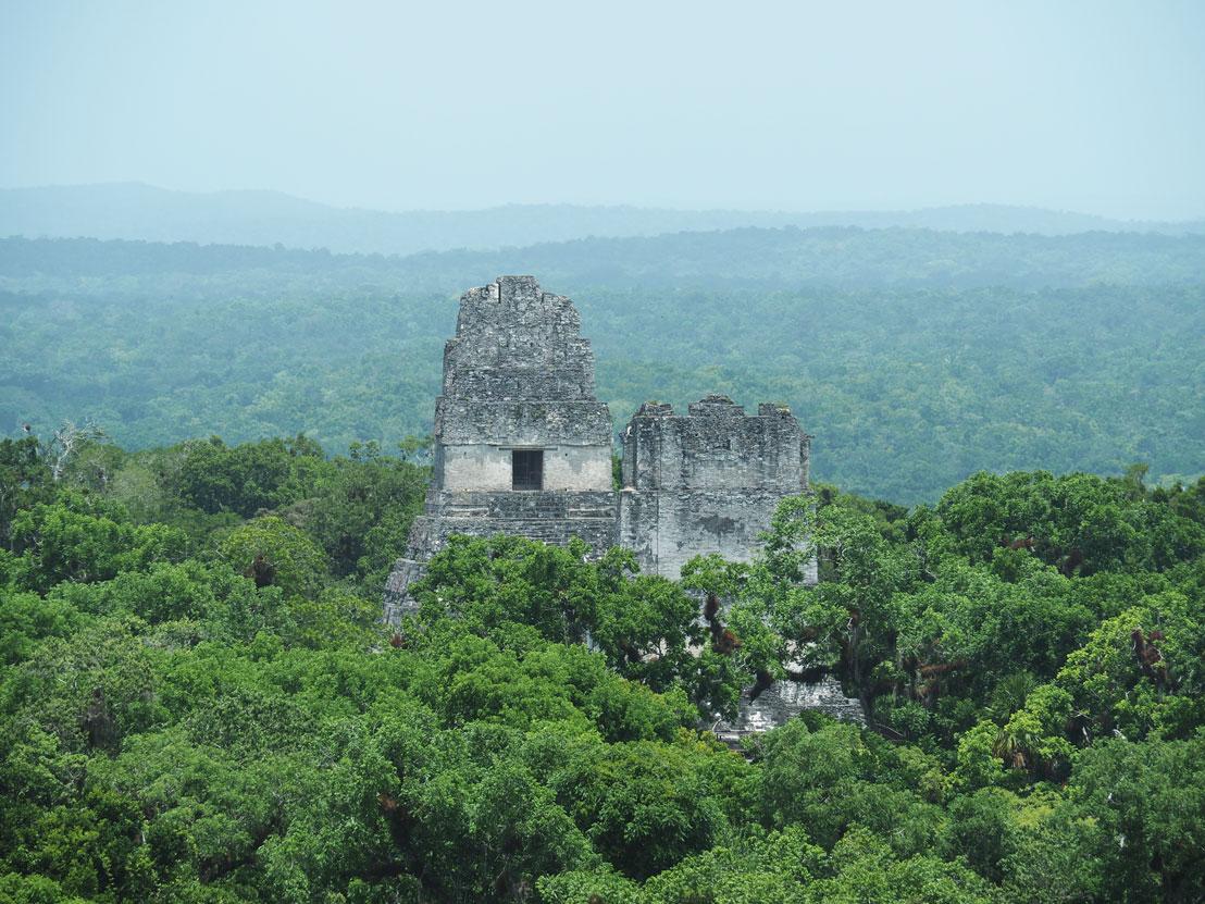 Temple I et II dépassant de la canopée à Tikal.