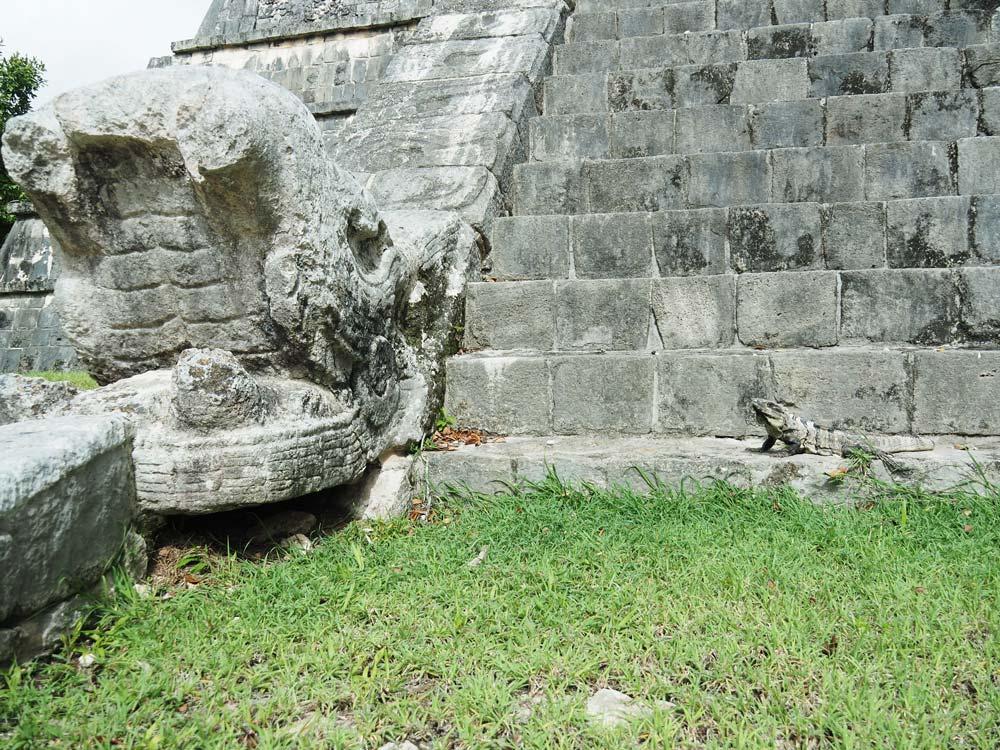 Vrai iguane à côté d'une statue de tête de serpent au pied d'une pyramide.