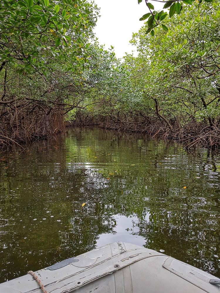 Tunnel de mangrove à Linton Bay au Panama.