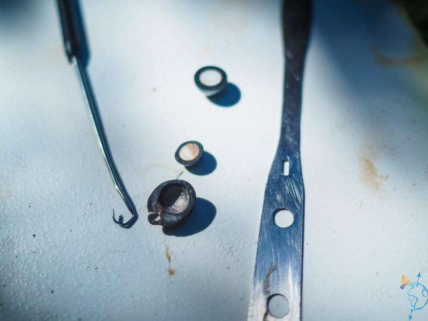 Coupe de perles de Tahiti avec le nucleus à l'intérieur.