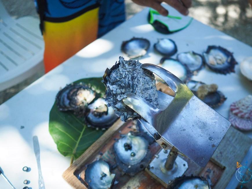 Huître sur son support pour greffer une future perle de Tahiti.