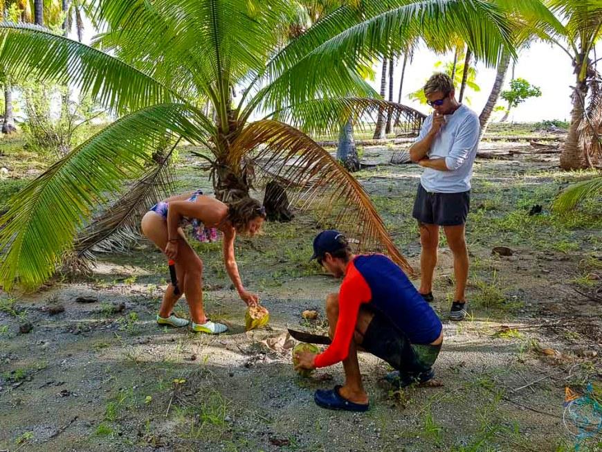 Découpe de noix de coco fraîches sur l'atoll de Makemo en Polynésie française.