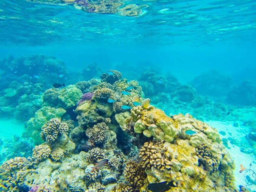 Snorkeling entre les magnifiques coraux de Toau.