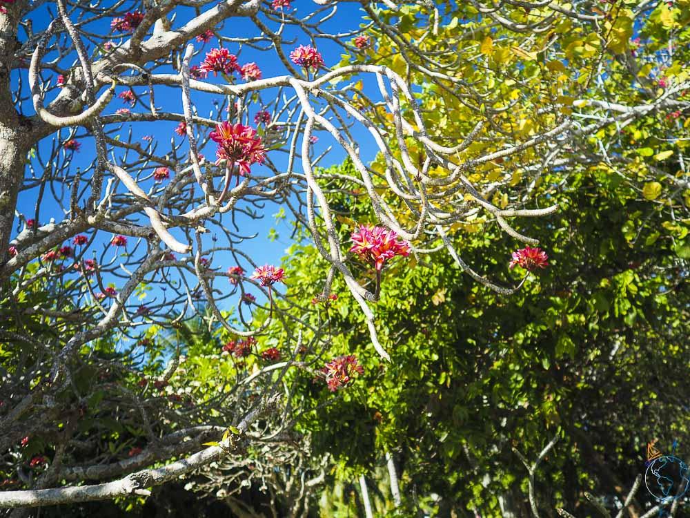 Fleurs dans les arbres.