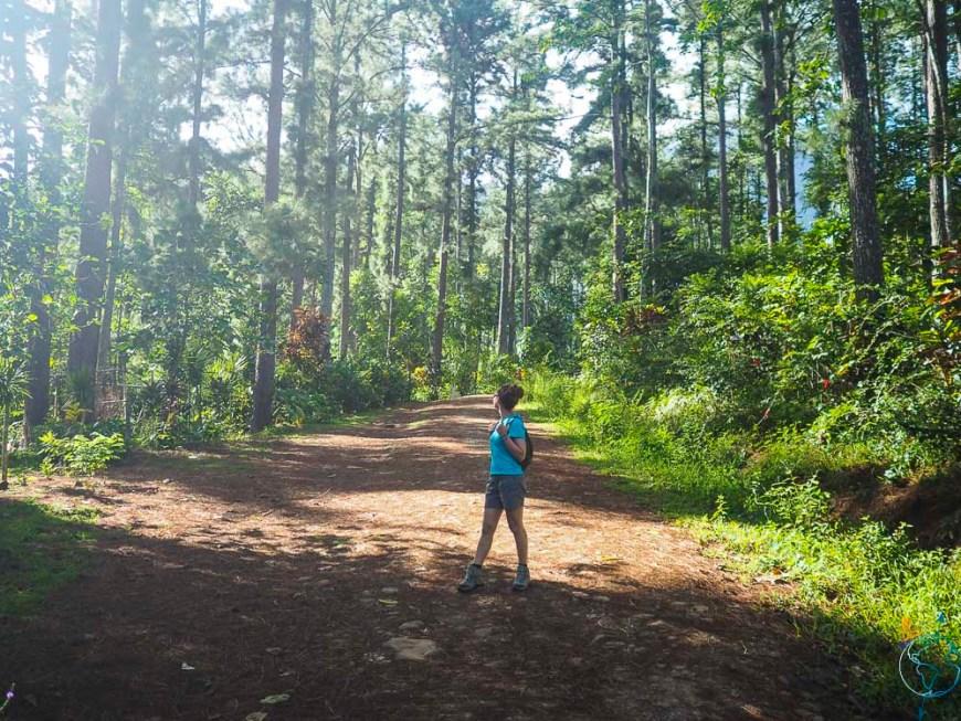 Le Tiki Parc Moorea sous les pins, dans les hauteurs de la vallée d'Opunohu.