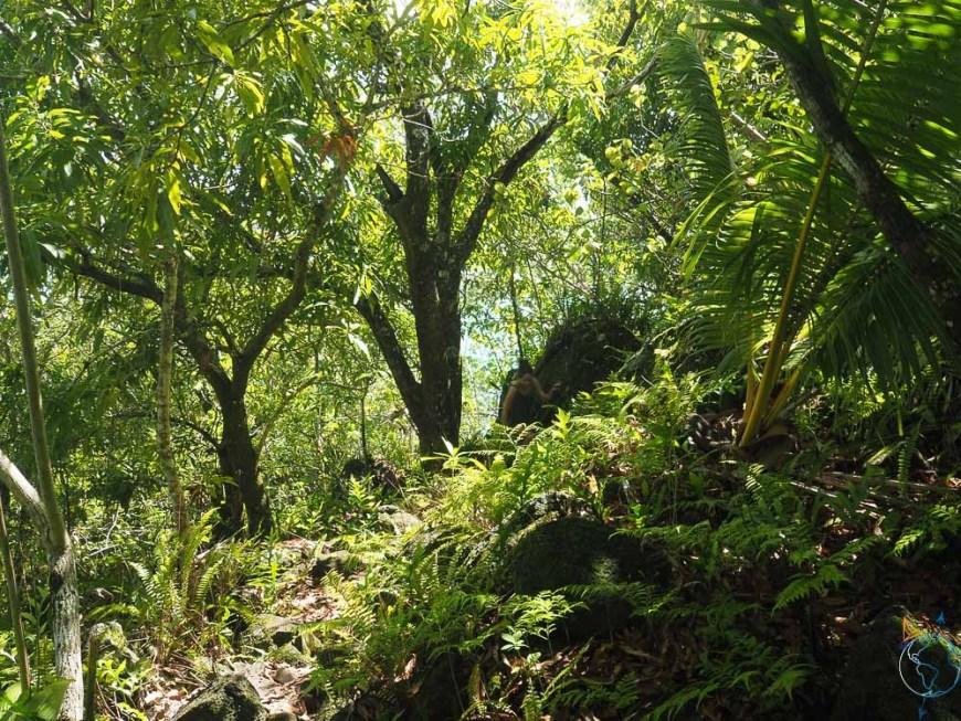 Randonnée au coeur de la forêt tropicale sur l'île de Maupiti