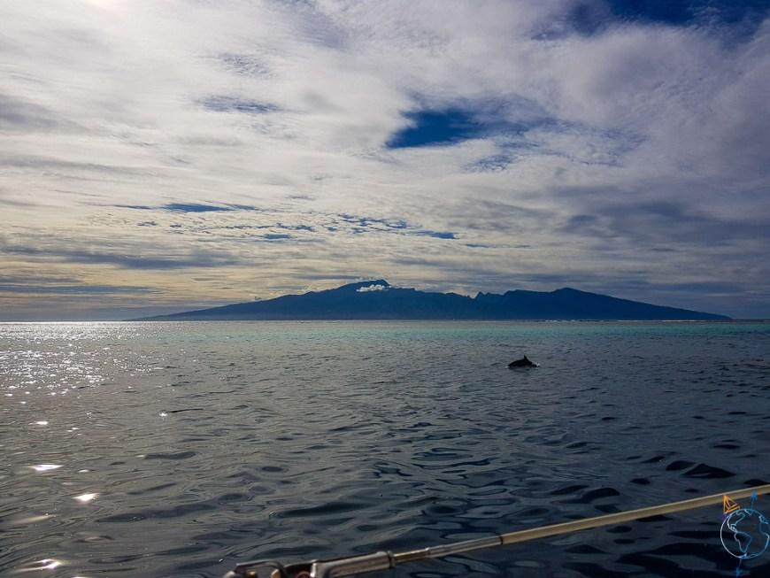 Vue sur l'île de Tahiti depuis Moorea avec un dauphin au premier plan.