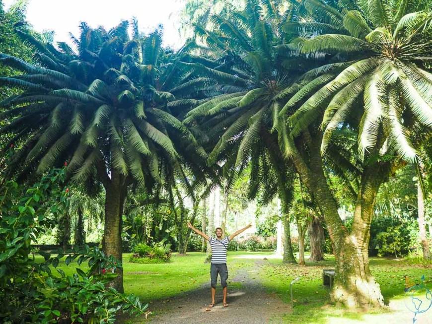 Jardin botanique Harrison Smith sur Tahiti.