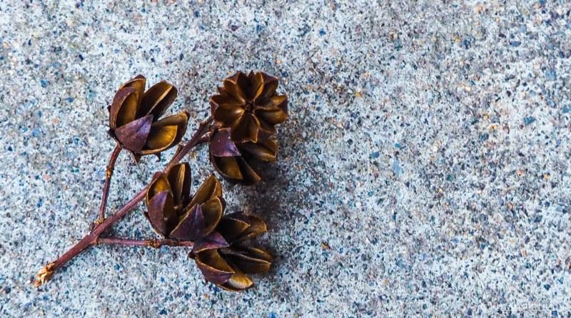 Hard buds on concrete step