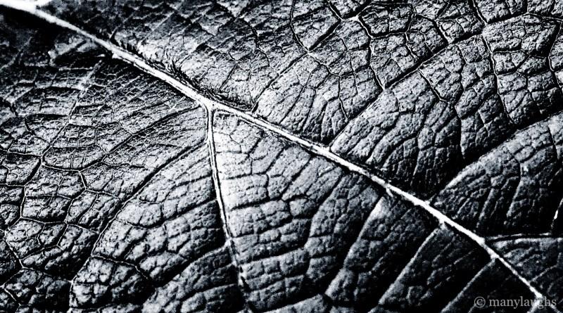Leaf skin
