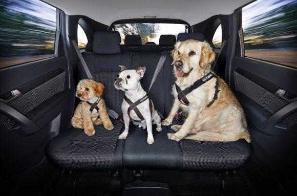 transporte de pets