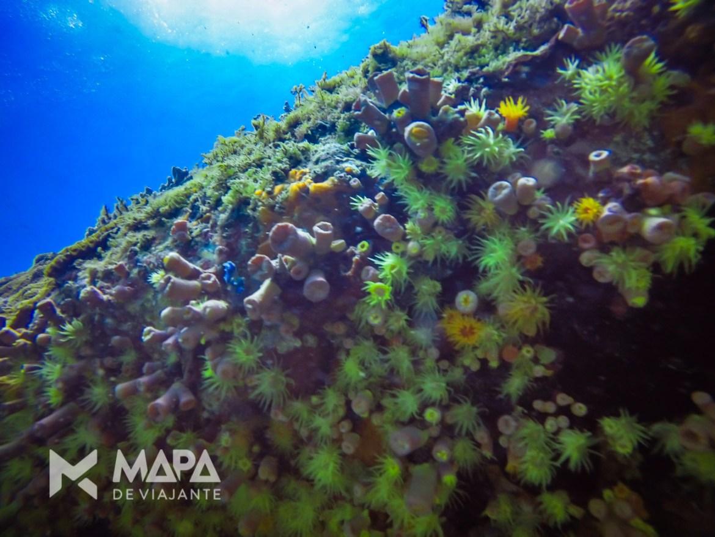 Coral sol se abre na ausência de luz, revelando tons amarelos e alaranjados.