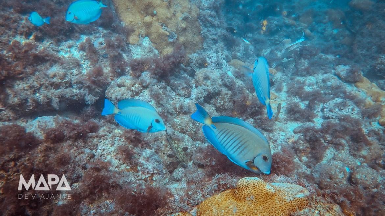 Vida marinha em Arraial