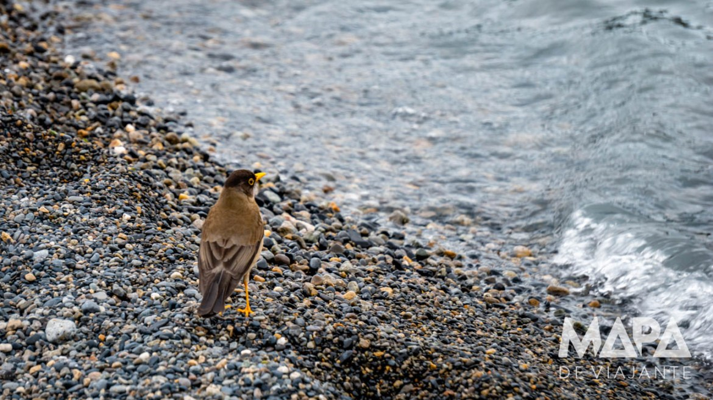 Pássaro em Torres del Paine
