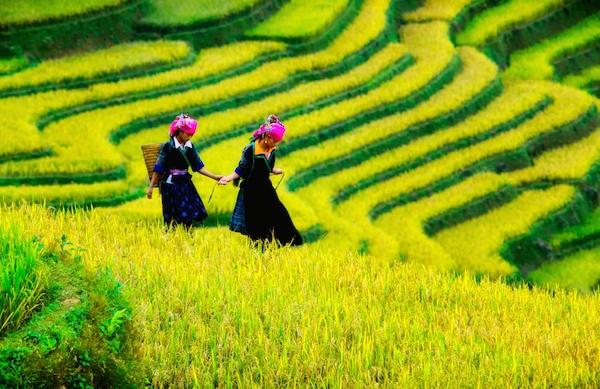 SAFFRON Sapa, Vietnam by Cristal Tran taller 600px