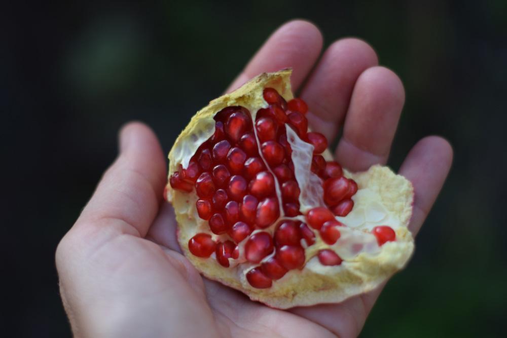 Alpujarra-Pomegranate-1000px-opt