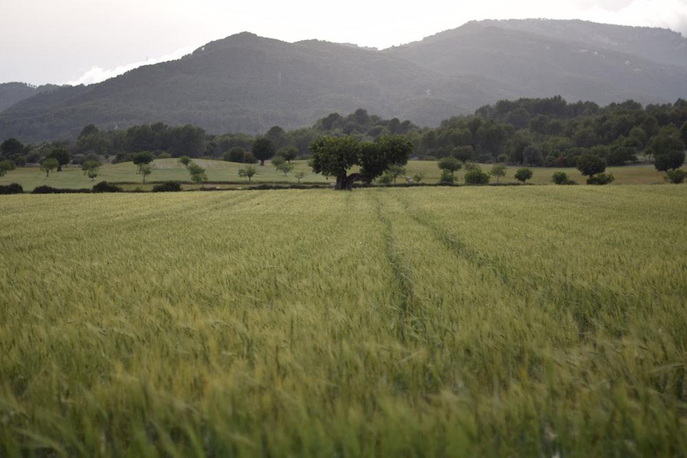 Photo of a field in Establiments in Mallorca Spain