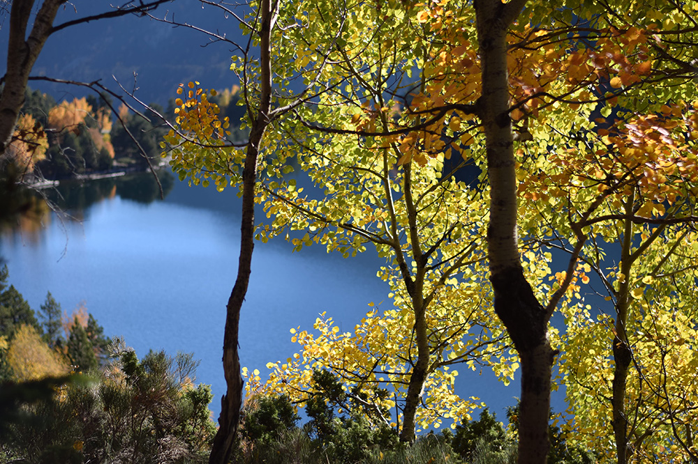 Photo of yellow, green and gold autumn leaves with a lake in the background in the Spanish Pyrenees.