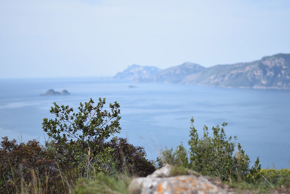 Photo of the Amalfi Coastline from a hiking trail called The Path of the Gods.